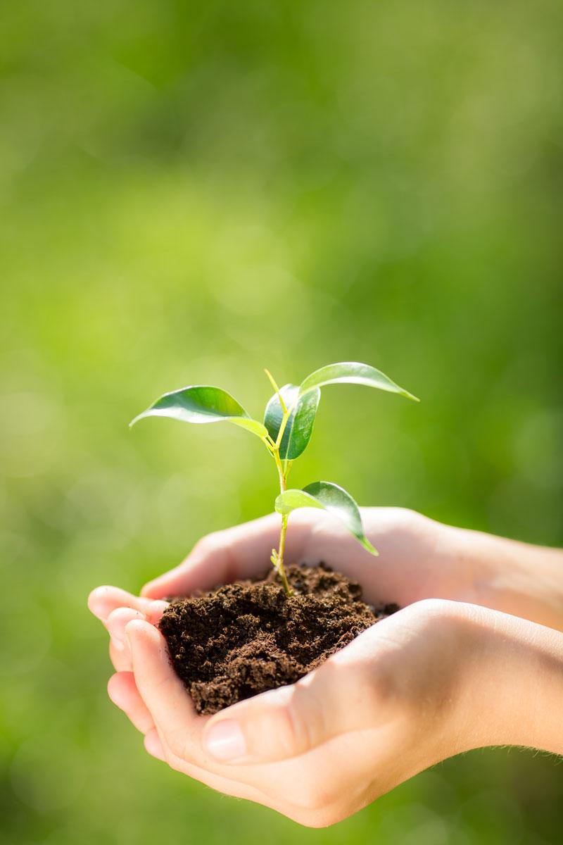 Graines Voltz : protection de l'environnement fait partie de son ADN
