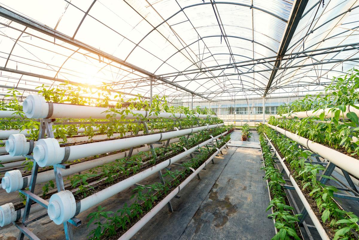 Graines Voltz : une croissance organique