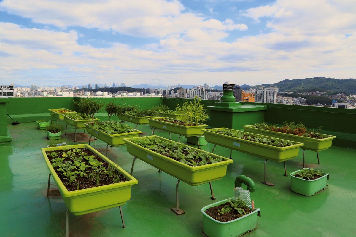Graines Voltz : Agriculture urbaine
