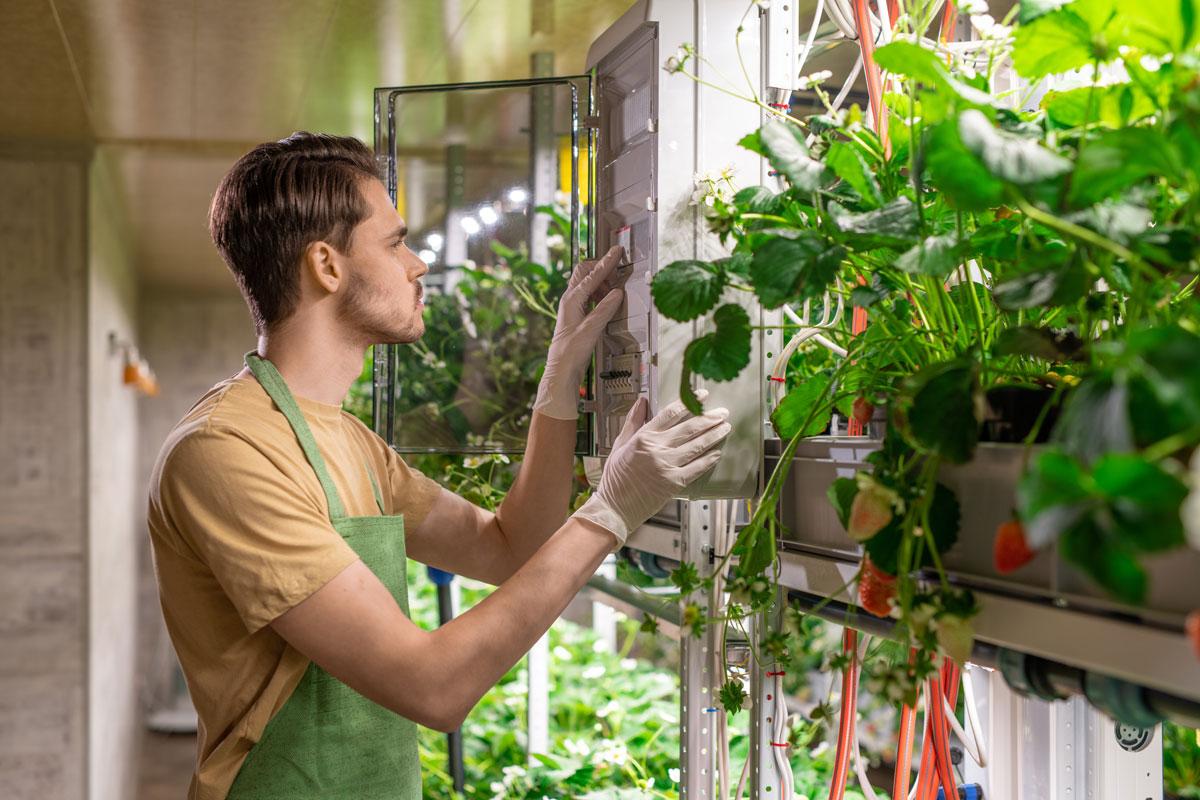 Graines Voltz : Vertical Farming